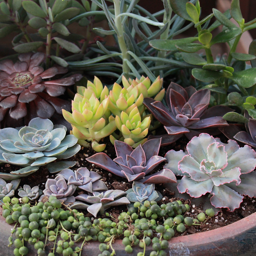 Succulent Saturdays: A Make and Take Event