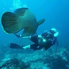 Diver & Napoleon fish