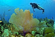 diver-79597_1920.jpg