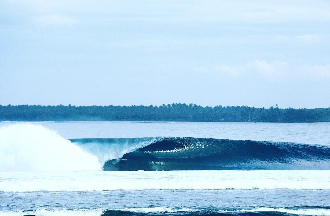 Sumatran-Pipe-April.jpg