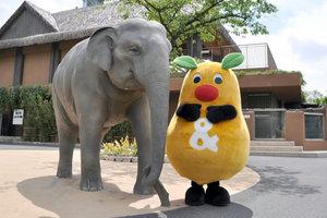キャラクター開発|動物園