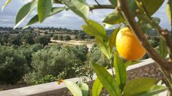 Orange Tree and View