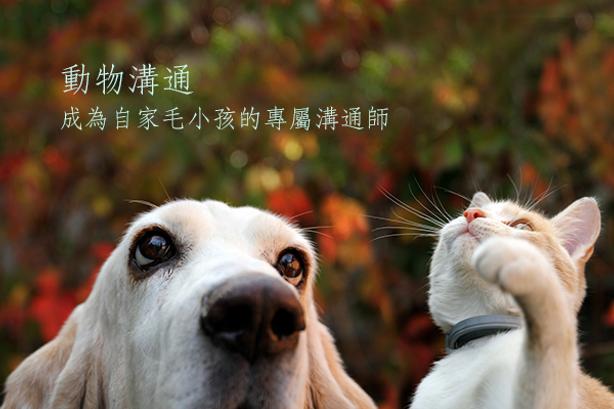 課程_動物溝通.png