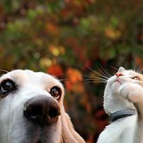 動物溝通-初階