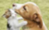 課程_寵物IET_600_364_w.png