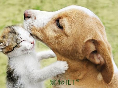 【課程介紹】寵物IET®