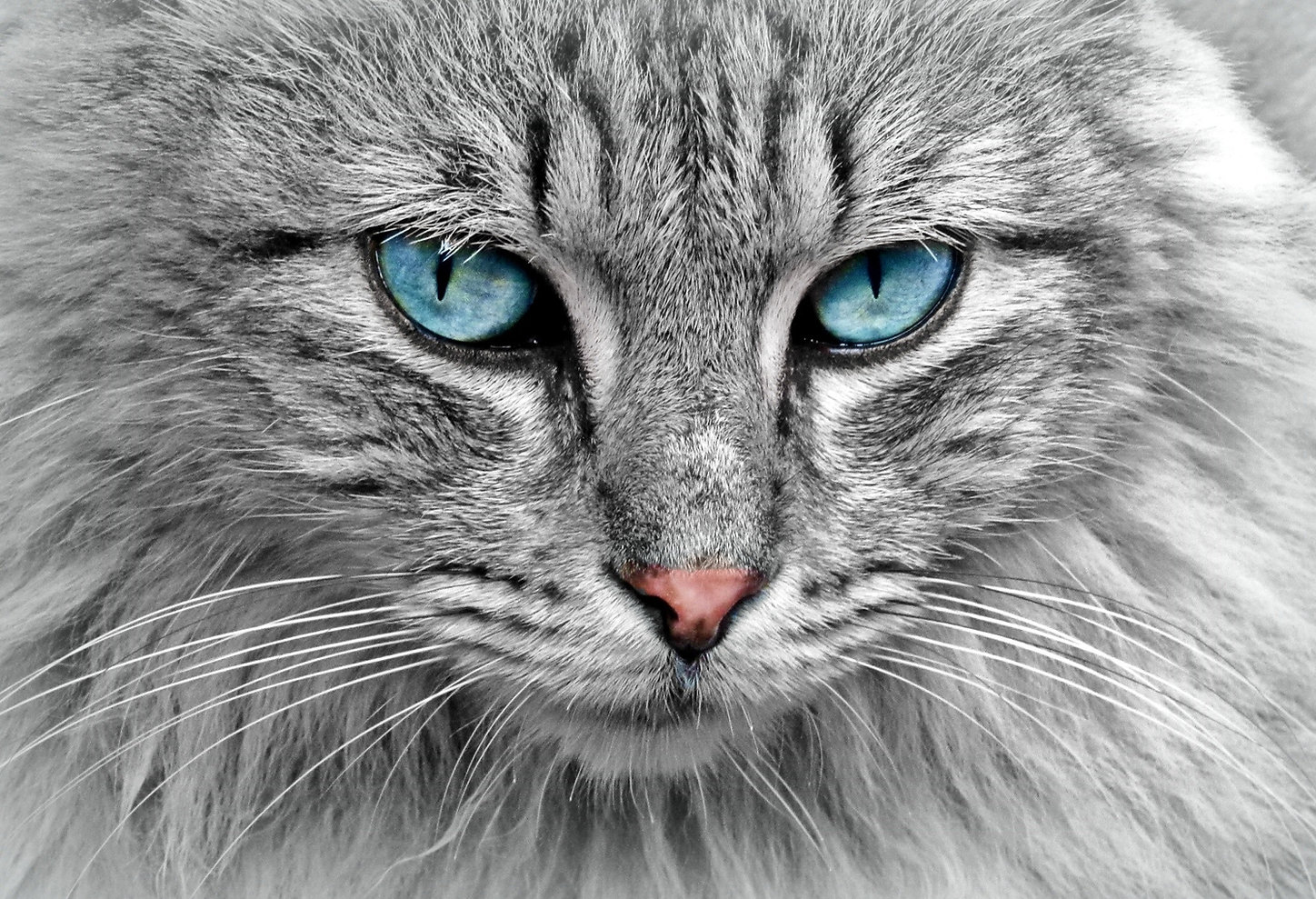 animal-cat-eyes-33537.jpg