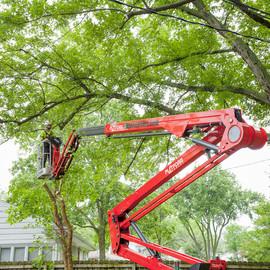Tree-Lift.jpg