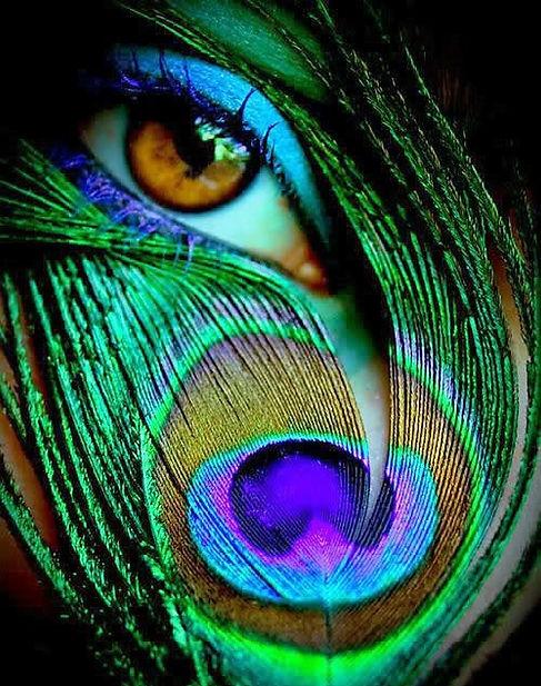 peacock-eye.jpg