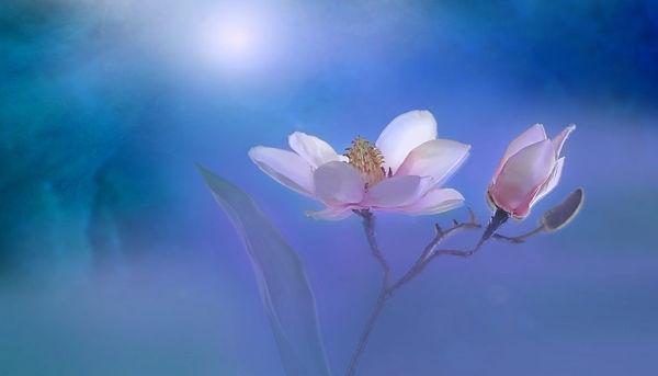 flower-3054801_1920-1024x585.jpg