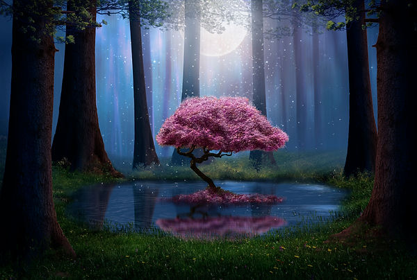 Pink tree and pond in the forest at nigh