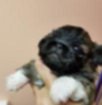 Mimi 3.5 weeks old.jpg