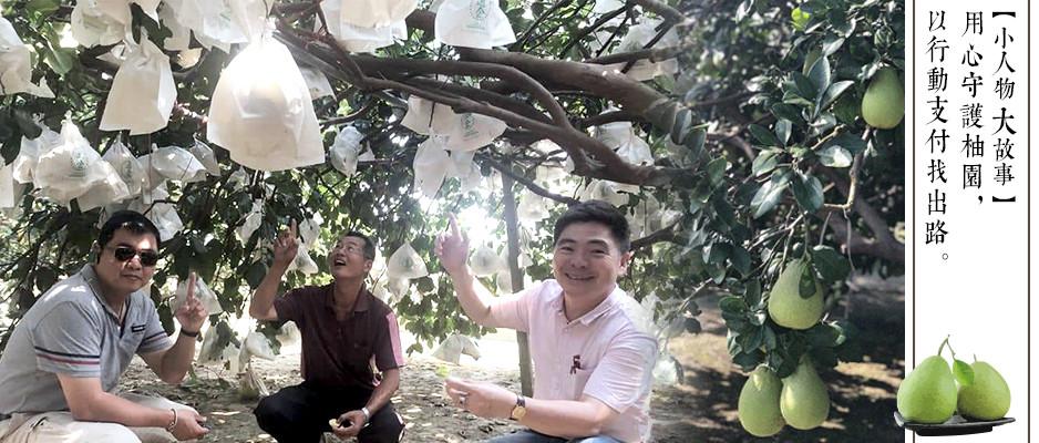 【小人物大故事 】用心守候柚園,以行動支付找出路 —麻豆柚農 曾新旭。