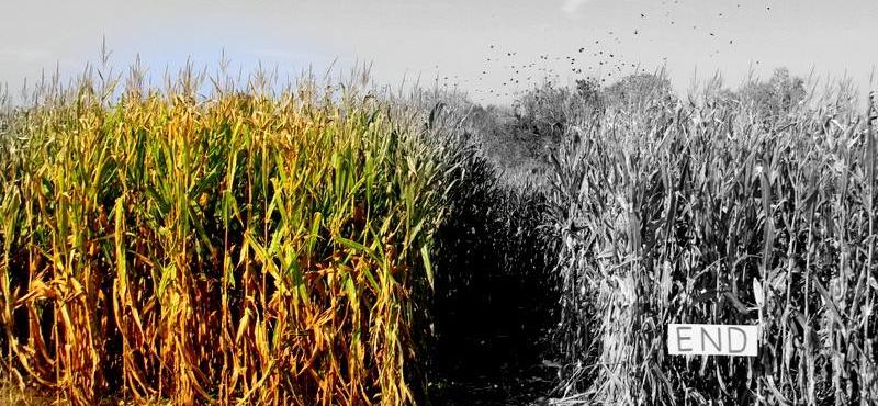 Devine's Corn Maze & Pumpkin Patch