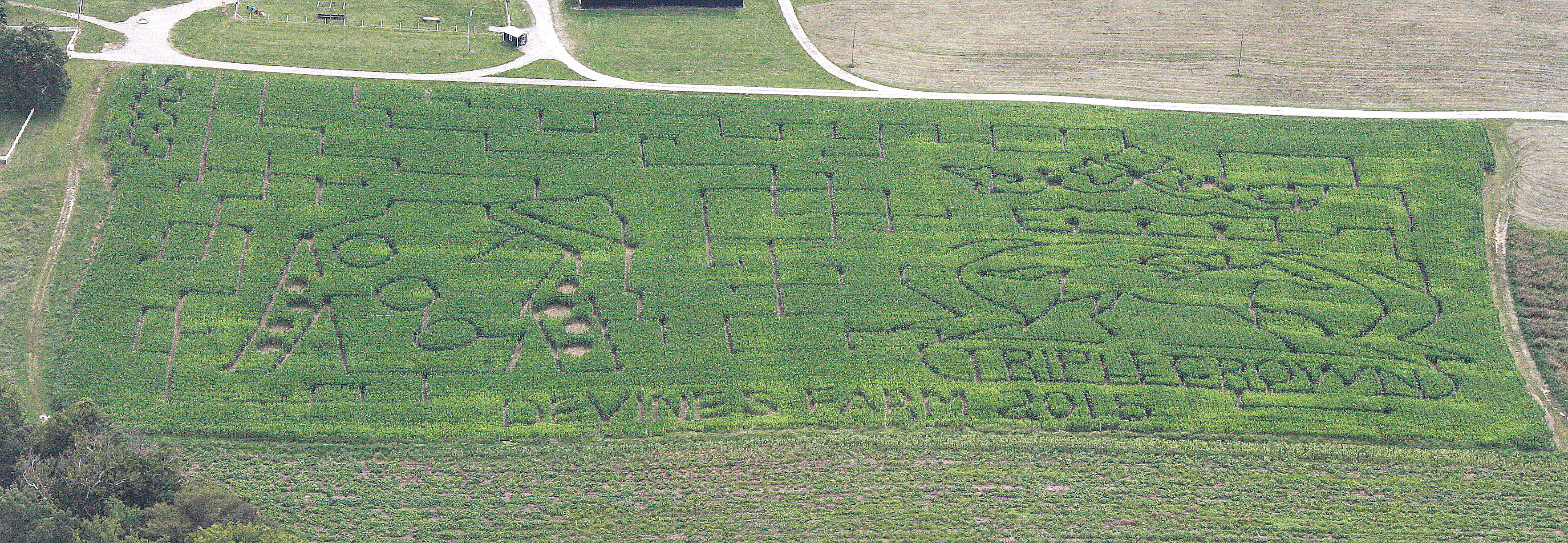 2015 Devine's Corn Maze Design R0 8-14-15.jpg