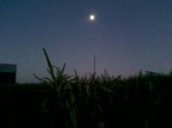 nightcorn.jpg