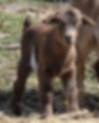 Peanut buckling 1.jpg