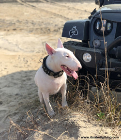 It's a Bully thing! loves adventure