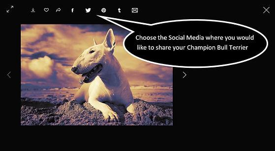 Share on Social Media.JPG