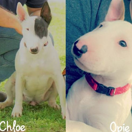 Chloe and Opie