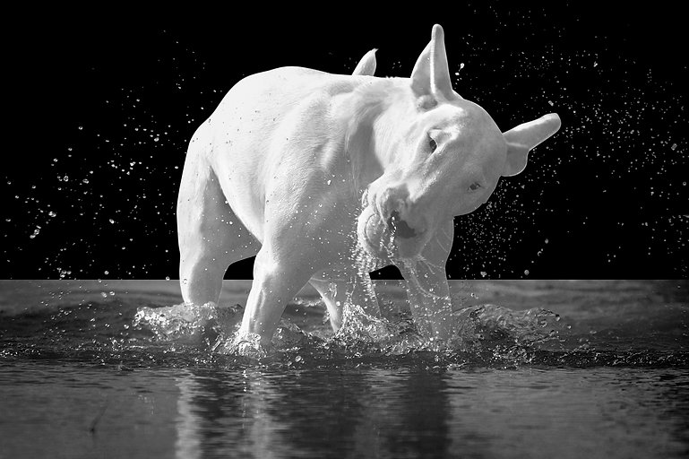 Black and white OOzi in the water .jpg