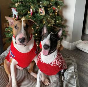 Moose & Avery