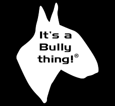R- WHITE HEAD BULLY THING  REGISTERED wi