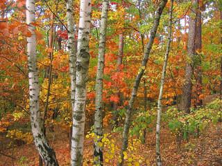 Conseils pour bien vivre l'automne