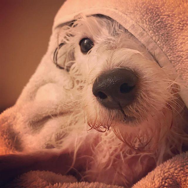 Bath time displeasure