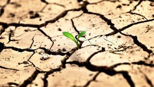 Всесвітній день боротьби з опустелюванням і засухою.