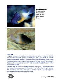 Livro_peixes_18x23_1.jpg