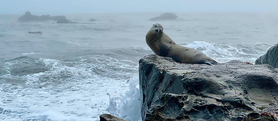 Walk With Me - My Seal Pup, Cambria, June 2021