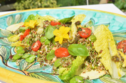 sprouting salad