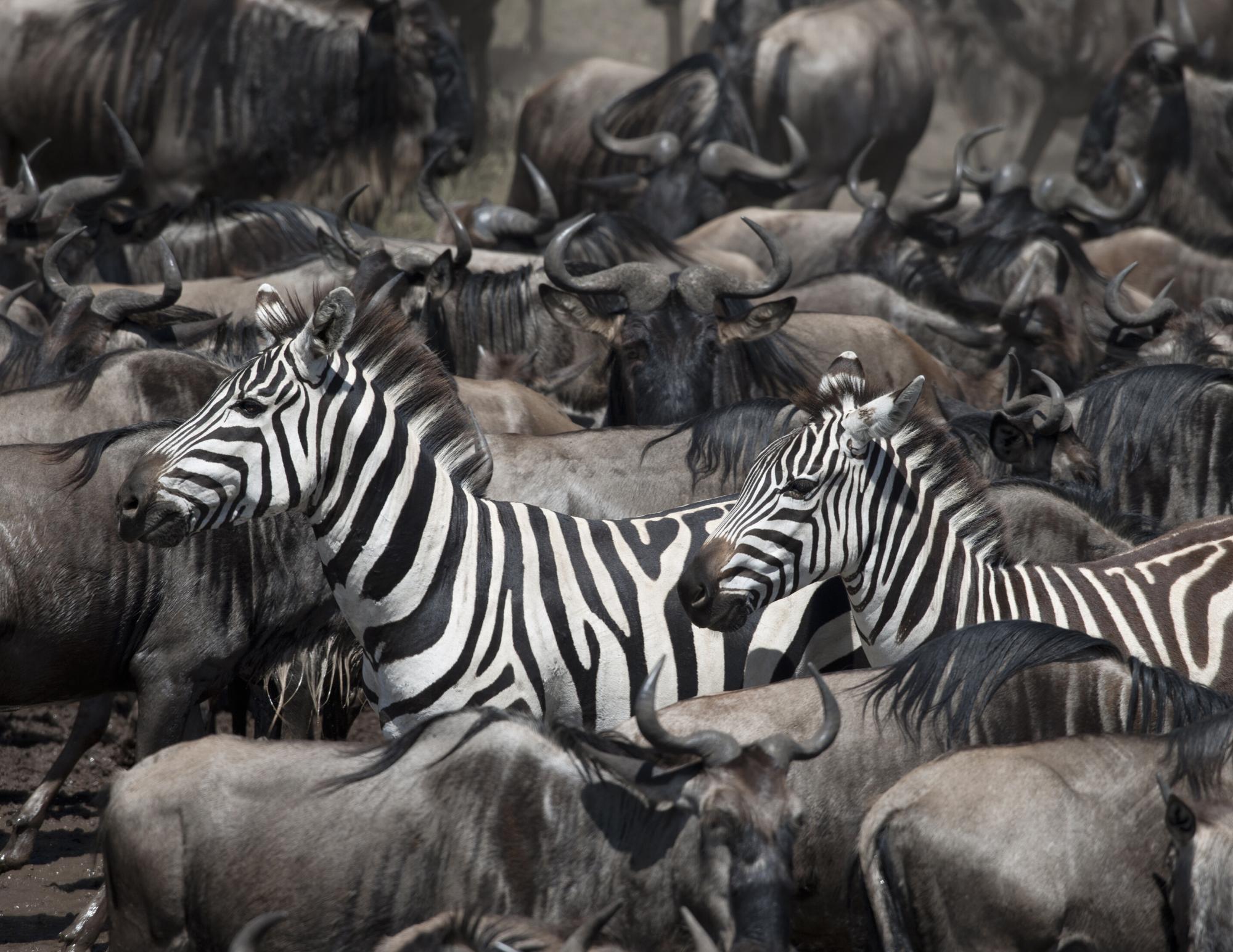 Serengeti Full - 7 Day - 4 Park Tour