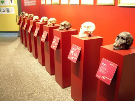 Naturkundemuseum Dortmund