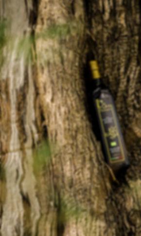 L'oro di calamigna, olio biologico, olio ventimiglia di sicilia