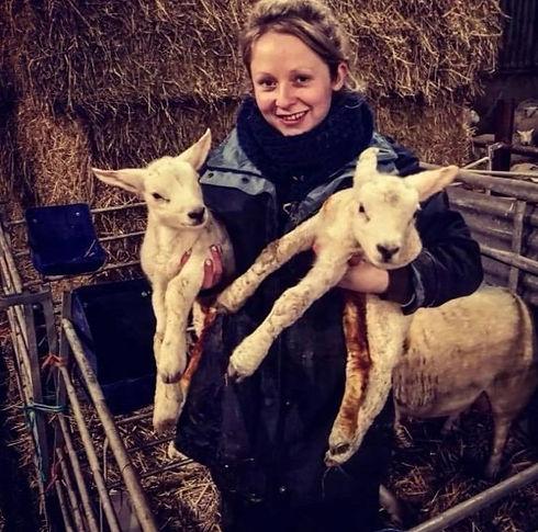 Mari lambs.jpg