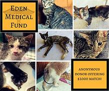 Eden Medical Fundraiser.jpg