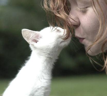 Eden Animal Haven girl with kitten