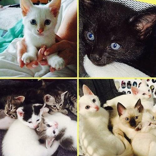 Various Kittens