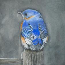 Missouri Bluebird