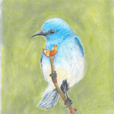 Bluebird Buddy