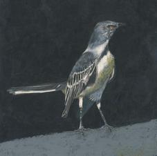 Tennessee Mockingbird