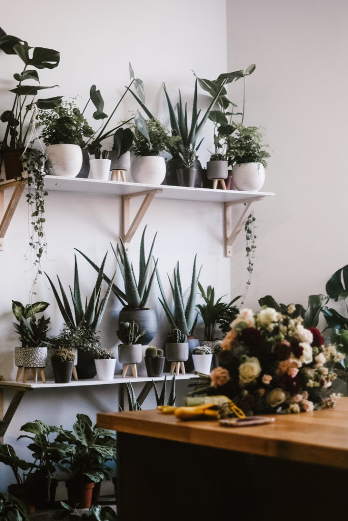 Cool house plants on shelves