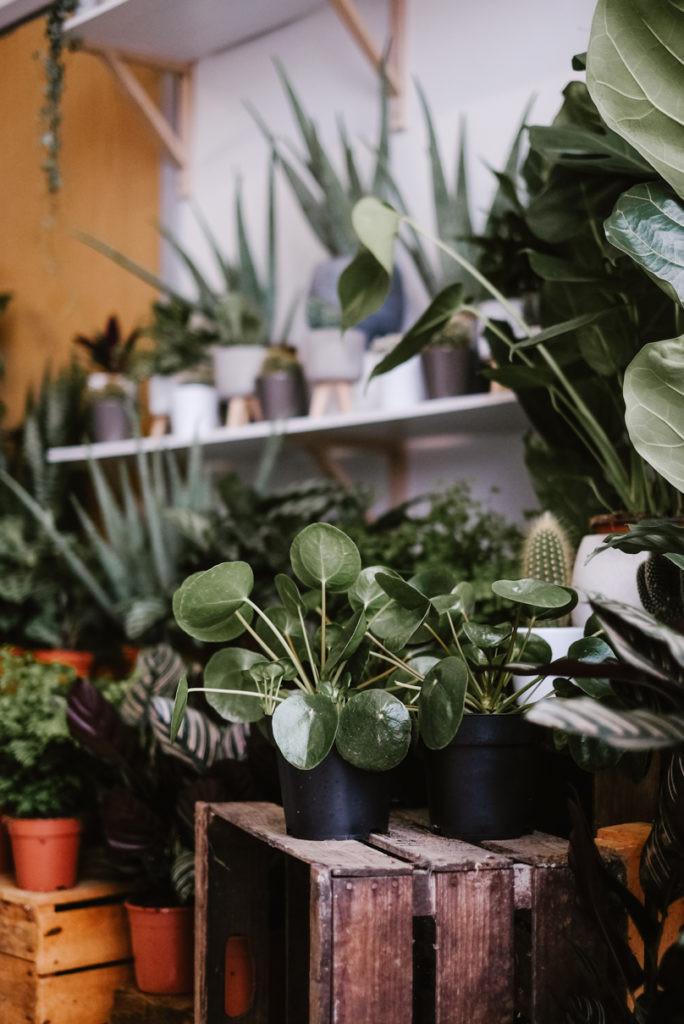 Bristol house plant shop