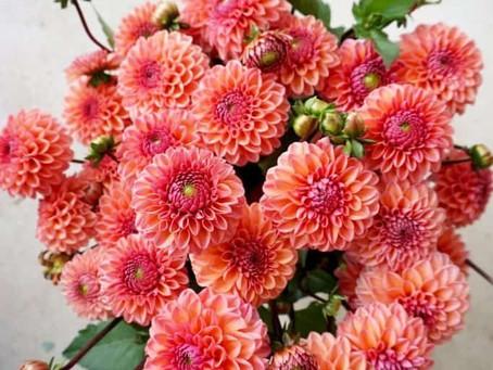 Top 10 Autumn Wedding Flowers