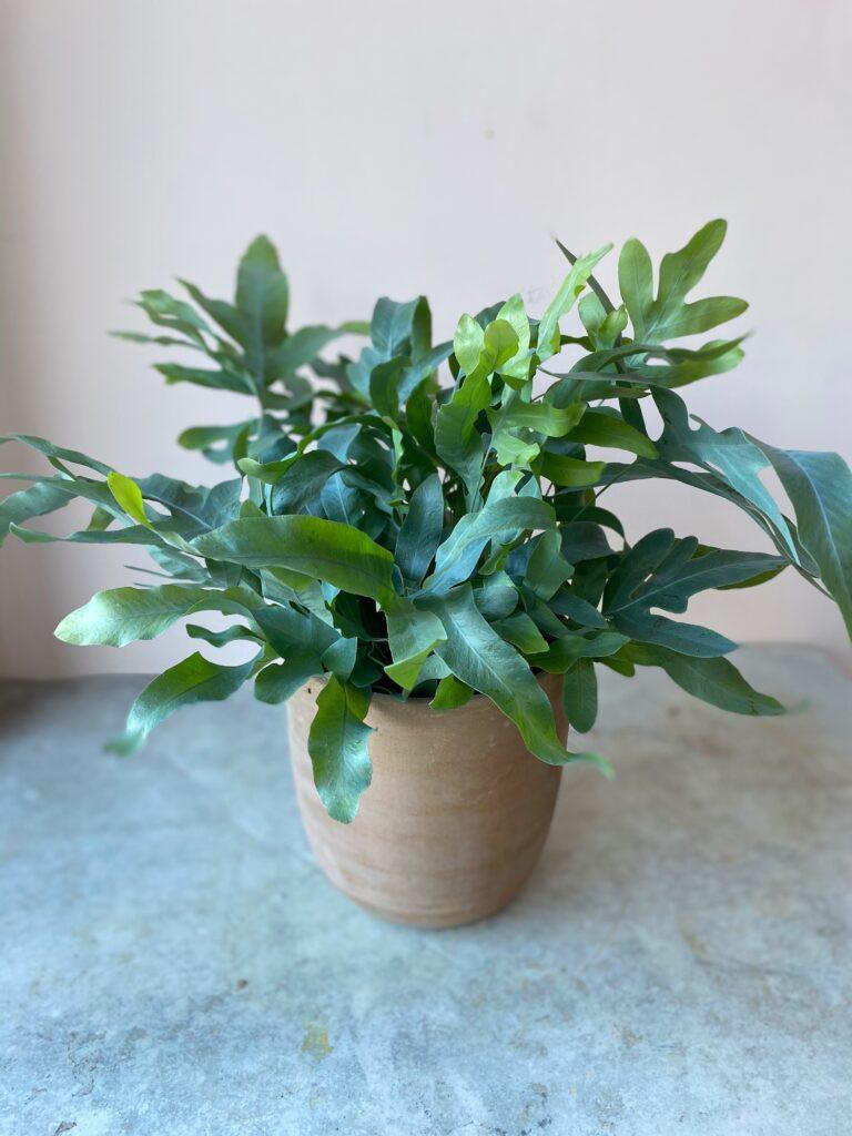 Top 5 house plants