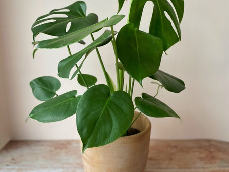Top 5 House plants