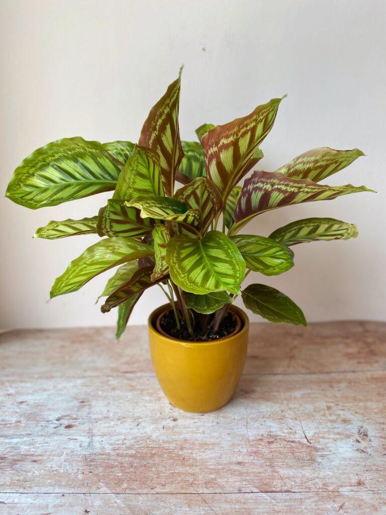 Plant shop Bristol