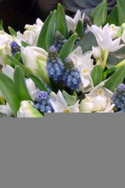 spring wedding bristol